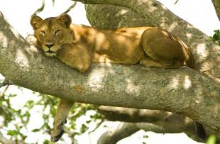 Tree_lion_Wiki