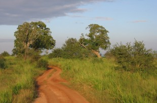 zambia_track_wiki