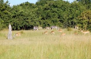 Luangwa_Nation_Park