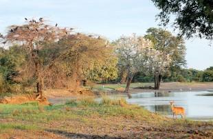 Luangwa_Walking_Wiki