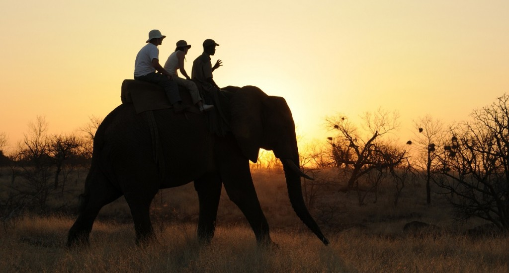 Vic-Falls-Elephant-Safari