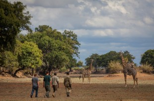 Walking_Safari_Norman_Carr_Safaris_DH